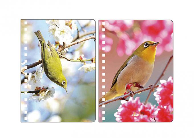 A5 3D Lenticular Spiral PET Notebook Covers With Lovely Birds Images