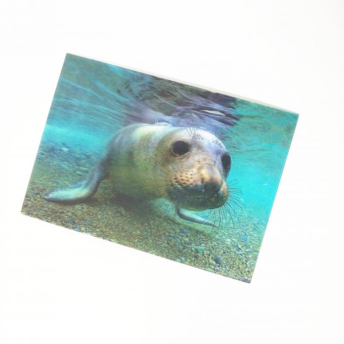 Animal 3d Lenticular Postcards / Custom Lenticular Cards Tear - Proof