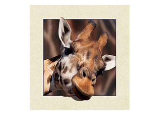 China Animal Stock 5D 3D Lenticular Pictures PET Printing Service Deer image supplier