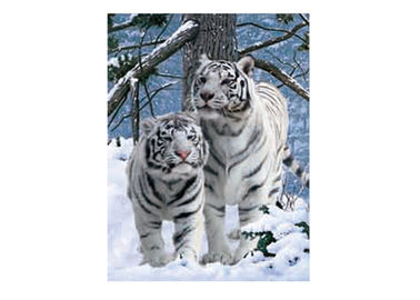 China Vivid Tiger Image 3d Lenticular Image For Home 0.76mm Thickness 3d Animal Pictures supplier