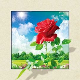 China Waterproof Flower Images 5d 3D Lenticular Pictures 40x40cm For Restaurant supplier