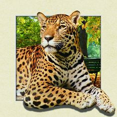 China Custom Lenticular Image Printing For Gift , 5d Animal Collage Poster 15.7x15.7 Inches supplier