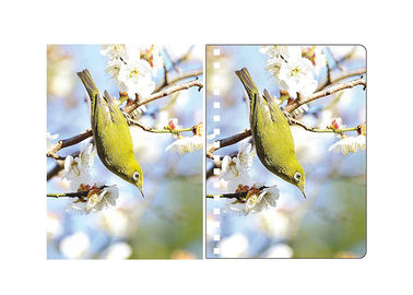 China A5 3D Lenticular Spiral PET Notebook Covers With Lovely Birds Images supplier